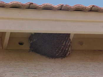 Beehive on a Phoenix, AZ home