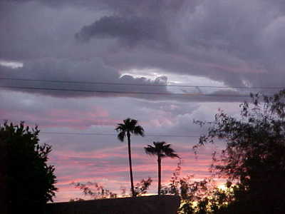 Palm trees against the pretty sunset in Mesa, AZ.