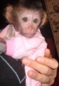 Cute Monkey Picture